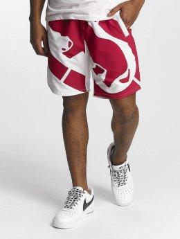 Ecko Unltd. shorts Muizenberg wit