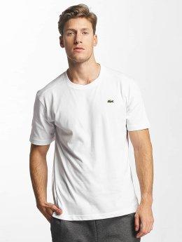 Lacoste T-skjorter Clean hvit
