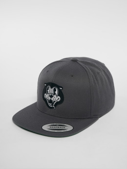 The Dudes Snapback Caps Dear Bear 6 Panel grå