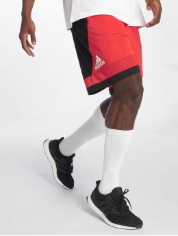 adidas Performance Basketballshorts Pro Bounc czerwony