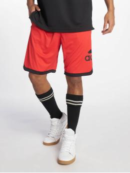 adidas Performance Basketballshorts SPT BOS rot