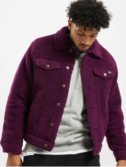 Dickies Lightweight Jacket Cawood purple