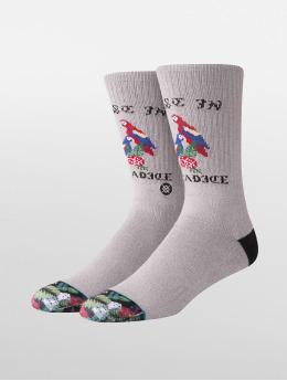 Stance Socken Paradice grau
