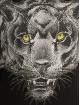 Horspist T-shirt Baguera nero 3