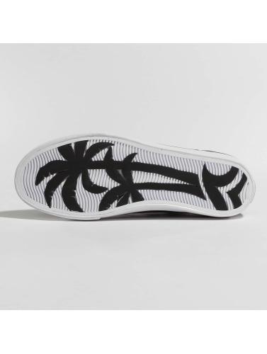 Project Delray Zapatillas de deporte C8ptown in negro
