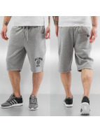 Dickies Shorts Salton City grau