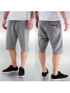 Dickies shorts Fallbrook grijs