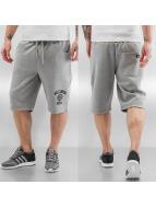 Dickies Shorts Salton City gris