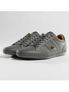 Lacoste Sneaker Chaymon grau