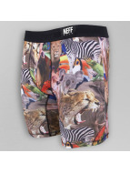NEFF Bokserki Nightly Underwear kolorowy