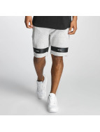 Pelle Pelle Shortsit 16 Bars Sweat harmaa