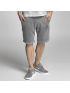 Petrol Industries shorts Sweat Shorts grijs