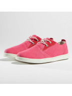 Timberland Baskets Groveton Canvas Oxford magenta